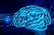 ワーキングメモリ、左脳と右脳で役割が違う?!